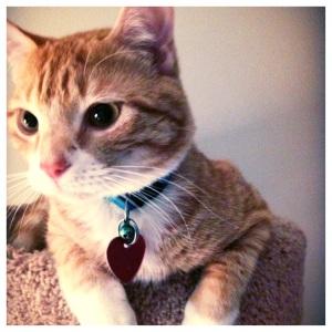 Pretty Kitty :)